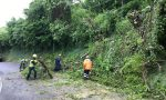 Piante pericolanti in collina, interviente la Protezione Civile Aib. LE FOTO