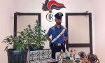 La serra di marijuana era in una stanza segreta in casa, arrestato
