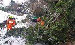 Piante cadute bloccano la borgata: l'intervento dei volontari Aib per liberare la strada