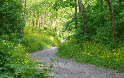 Un piano per la salvaguardia del territorio attraverso la valorizzazione di tutto il «patrimonio boschivo»