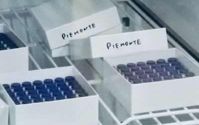 Altre 4765 persone vaccinate contro il Covid in Piemonte