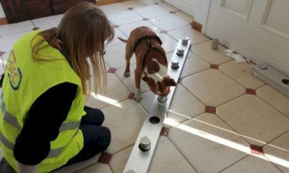 """All'aeroporto di Cuneo verranno impiegati i cani """"anti-Covid"""""""