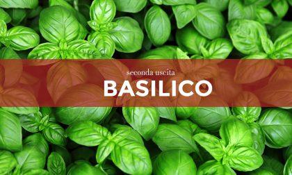 Tutti ortisti: in edicola con La Nuova Periferia di Settimo i semi di basilico