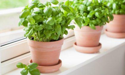I nostri consigli: è facile da coltivare, ma ha bisogno di calore e molta luce