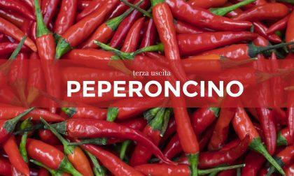 Tutti ortisti: in edicola con La Nuova Periferia di Settimo i semi di peperoncino