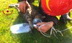 Il video dei Vigili del fuoco che rianimano un gattino con l'ossigeno