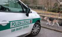 Cane legato e abbandonato sul ballatoio, denunciato il proprietario