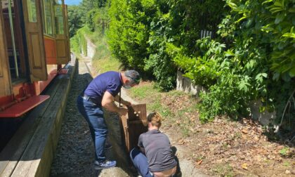 Recuperato un capriolo ferito lungo la tramvia Sassi - Superga