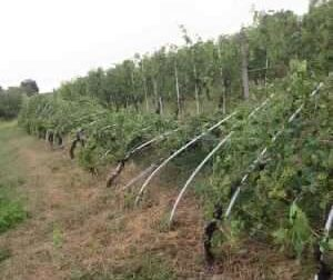 Danni all'agricoltura per il maltempo: dalla Regione 3milioni di euro per le reti anti-grandine