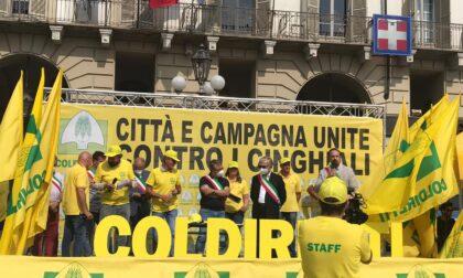 Emergenza cinghiali, i sindaci della collina in piazza con la Coldiretti