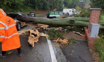 Maltempo, un albero si abbatte sulla strada a San Raffaele Alto