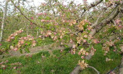 Richiesta danni da parte delle aziende agricole per le gelate del 7 e 8 aprile 2021. Le domande  entro il 12 ottobre