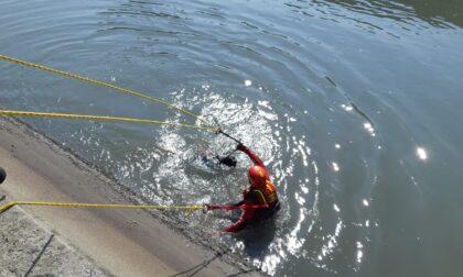 Cade un cane nel canale, salvato dai Vigili del Fuoco